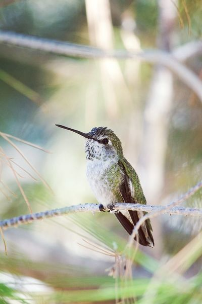 One Animal Animal Themes Animal Wildlife Animals In The Wild Bird Nature Hummingbird Beauty In Nature Animal Day Branch Songbird  Outdoors Perching No People Insect Close-up Hovering Living Organism