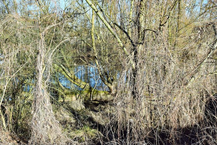 An der Havel bei Oranienburg Plant Tree Tranquility Land Forest No People Day Nature Tranquil Scene Growth Beauty In Nature Scenics - Nature Grass Landscape Environment Non-urban Scene Outdoors Field Branch Water WoodLand Dry Winter Wilderness Hidden