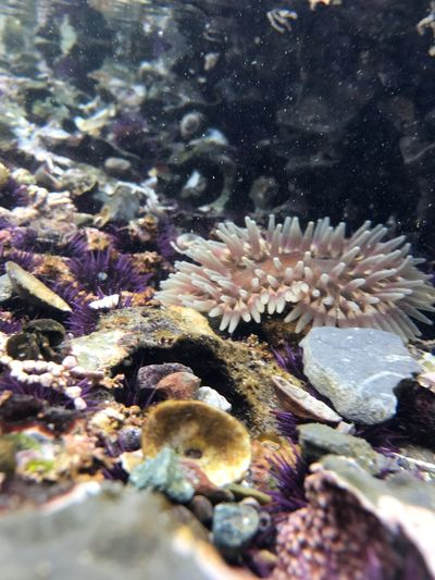 Underwater Sea Life Coral UnderSea Nature Animal Themes No People Animals In The Wild Sea One Animal Water Close-up Outdoors Day Beauty In Nature Sea Anemone