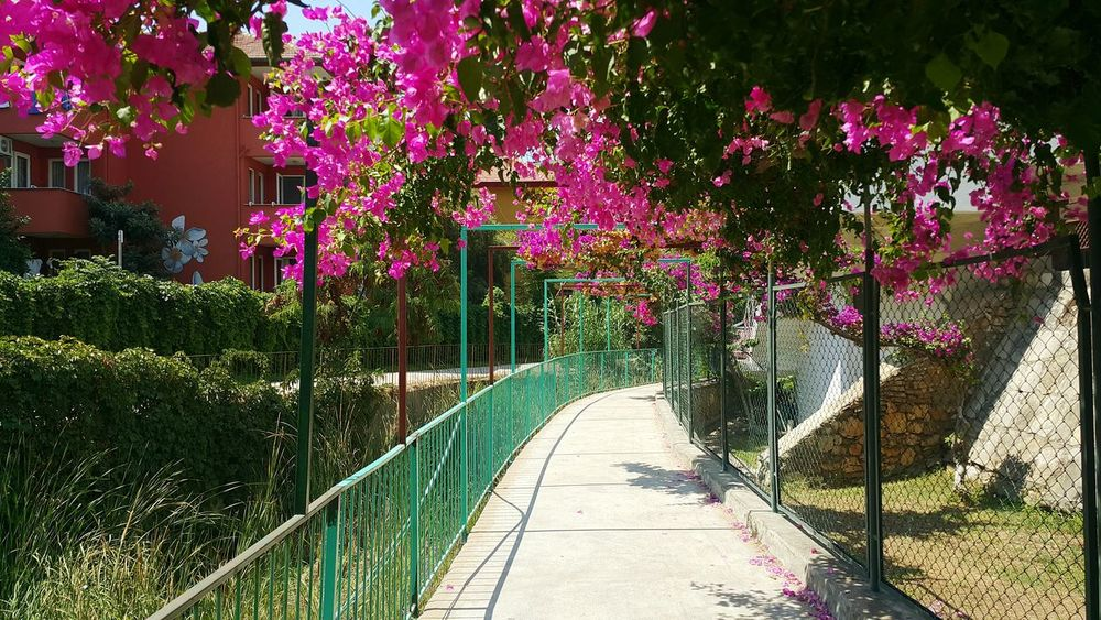 Beauty In Nature Flower Outdoors Alanya Turkey Day Nature Growth
