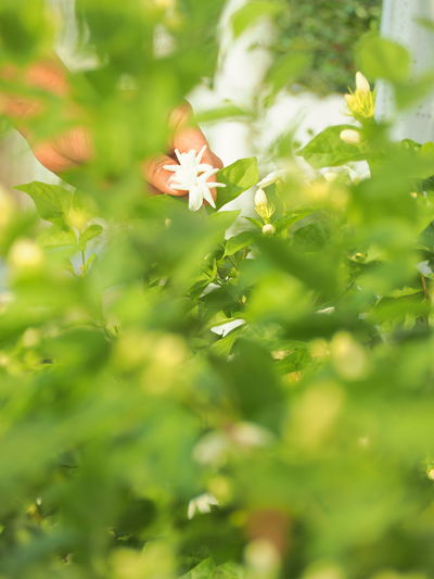 Flower Defocused Leaf Autumn Close-up Plant Green Color Grass Dandelion Pollen Day Lily Wildflower Petal Stamen Maple Leaf Blooming In Bloom Osteospermum Cosmos Flower Passion Flower Pistil Sunflower Lily Hibiscus Blossom Botany Dandelion Seed Rhododendron Daisy Single Flower