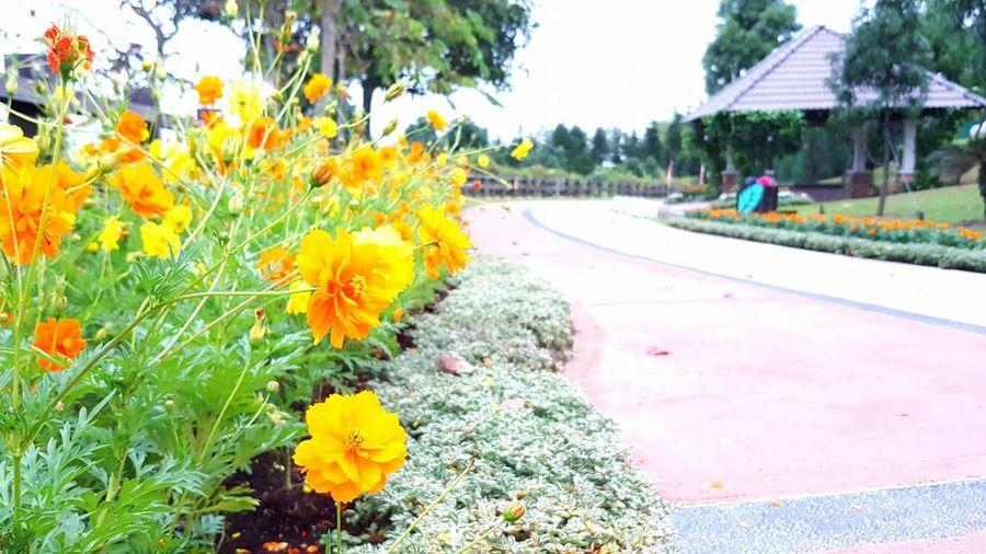 Flowers at Taman Saujana Hijau,Putrajaya,Malaysia Beauty In Nature Flowers Garden Marigold Flower Nature Outdoors Putrajaya, Malaysia Taman Saujana Hijau