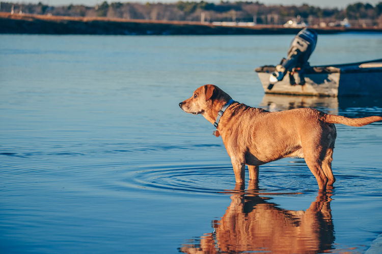 Dog standing on a lake