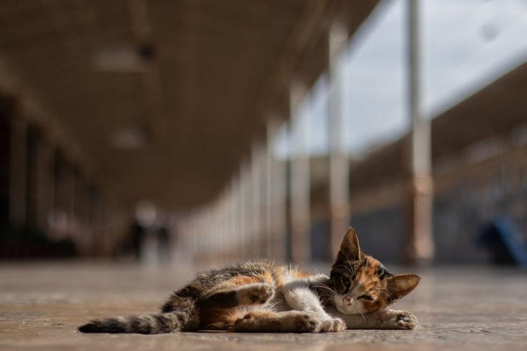 Close-up of kitten lying on floor
