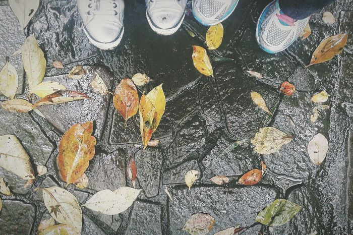 Autumn Leaves Autumn 2015 Fallen Leaves Tokyo Autumn 2015 Tokyo Nature Urban Nature Nature Naturelover EyeEm NatureLover Naturephotography Naturecollection Rain Place Of Scenic Beauty Tonogayato Teien Tokyo Japan Travel Photography Changing Seasons 秋 Fall