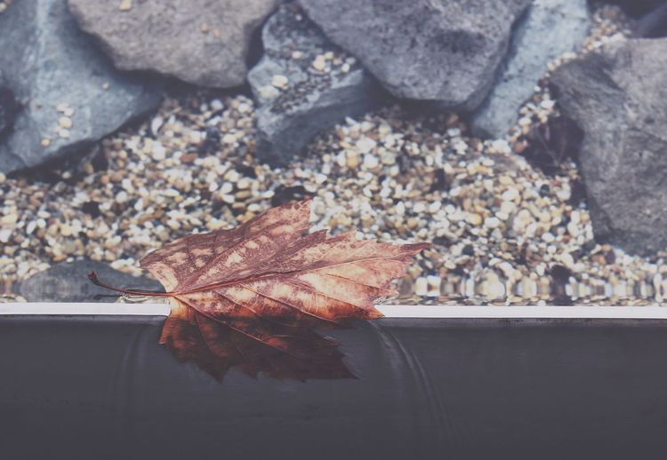 Autumn Beauty In Nature Brown Change Close-up Leaf Leaves Nature No People Rock Rocks Rocks And Water Sand Season  Water