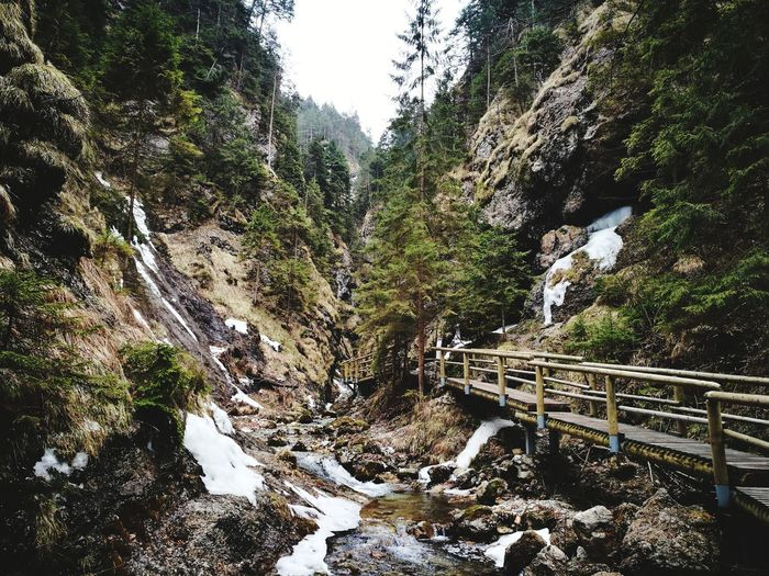 Tree Water Forest Sky Rocky Mountains Scenics Idyllic Calm Mountain Range