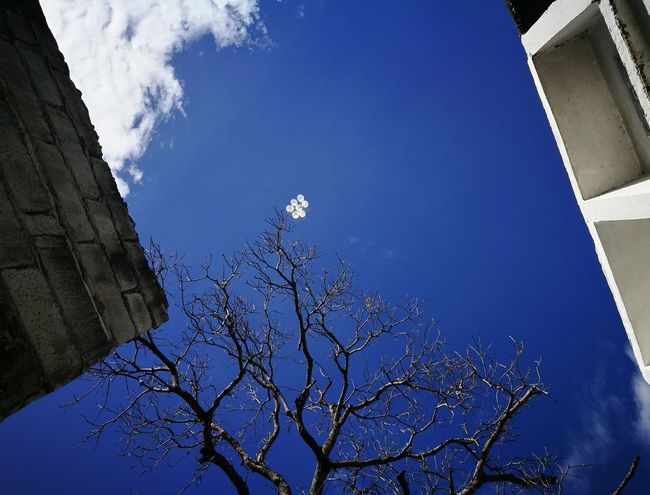 Sky is the limit Low Angle View Blue Day Tree Sky Nature Fragility No People Outdoors Beauty In Nature Flower Branch Freshness Your Design Story EyeEm Best Shots Philippines Street In Color Outdoor Street Photography Eyeem Philippines Colour Your Horizn Stories From The City