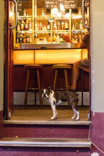 Berlin Pets