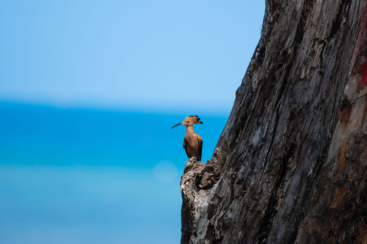 Close-up of bird perching on tree against blue sky