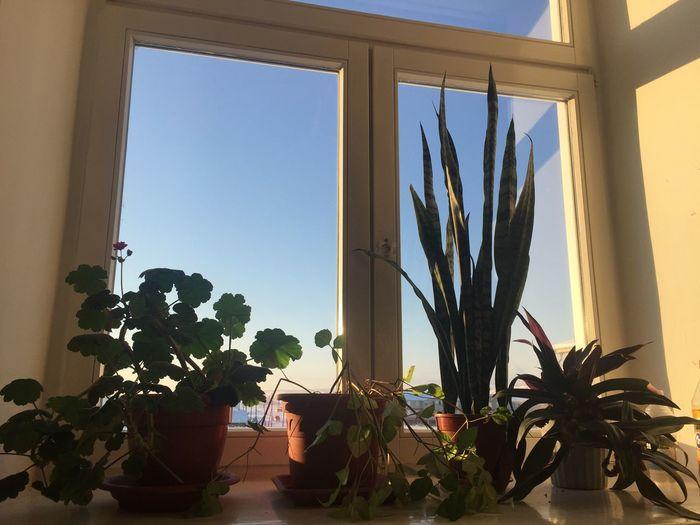 Second Sky Plants Flowers Window School