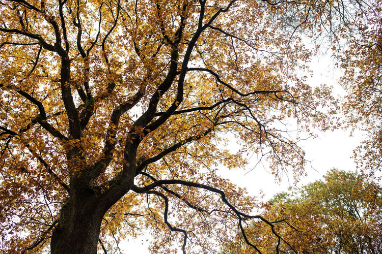 Tree Plant Low Angle View Sky Branch Beauty In Nature Growth No People Nature Day Tranquility Outdoors Autumn Tree Trunk Trunk Tree Canopy  Flower Full Frame Backgrounds Springtime Cherry Blossom