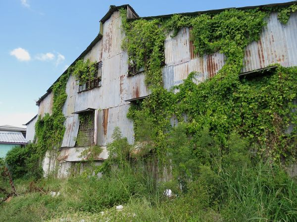 Abandoned building in Bridgetown, Barbados. Architecture Built Structure Building Exterior No People Low Angle View Green Color Outdoors Grass Sky Nature Ivy Plant Derelict Abandoned Abandoned Buildings Bridgetown Barbados Caribbean Caribbean Life Overgrown And Beautiful Overgrown