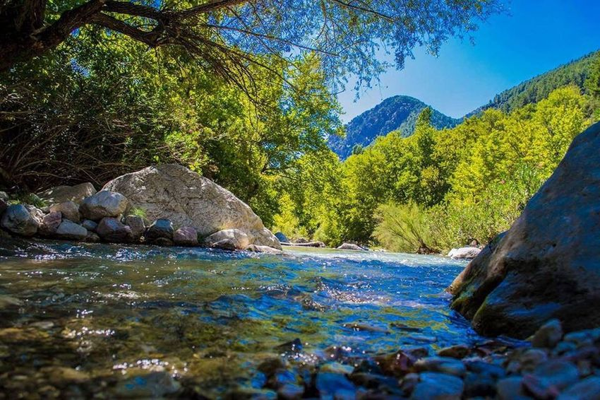 Tree Water Tranquil Scene Scenics Mountain Beauty In Nature Nature Blue Tranquility Waterfront Idyllic Non-urban Scene Stream Surface Level Flowing Remote Day Outdoors Flowing Water No People