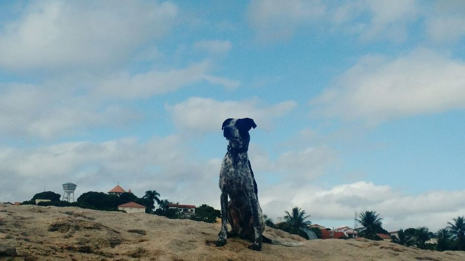 Thoughts are so much like heaven.. Dog Skyline Weekend Dogs Popular Photos The Week On EyeEm . Dogslife My Dog