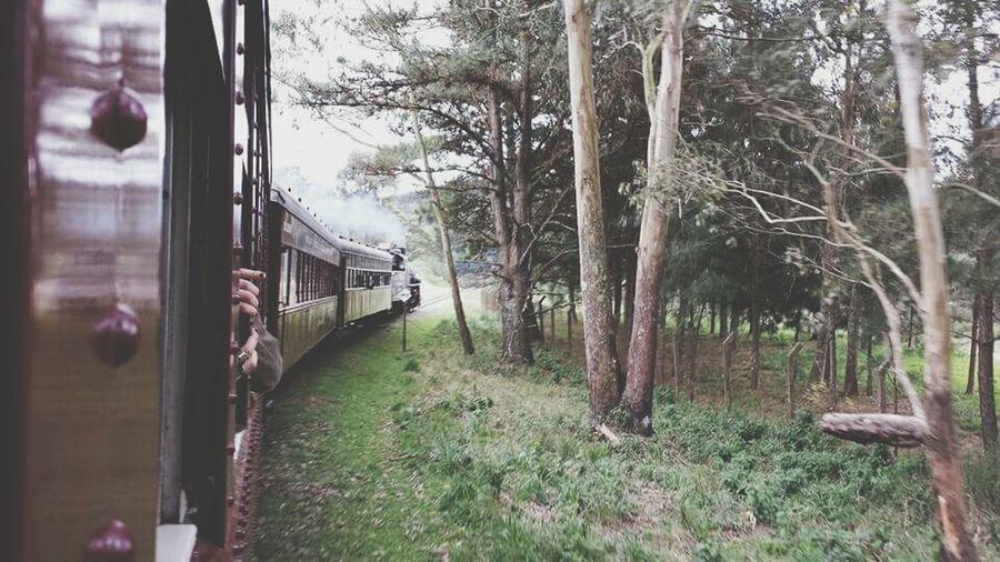 Enjoying Life Trip Trip Photo Bytrain Travelbytrain Brazil The Traveler - 2015 EyeEm Awards
