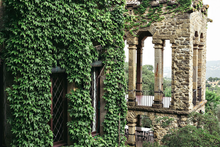 Architectural Column Architecture Building Exterior Built Structure Castle Day Growth Ivy Medieval Nature No People Outdoors Plant Tree