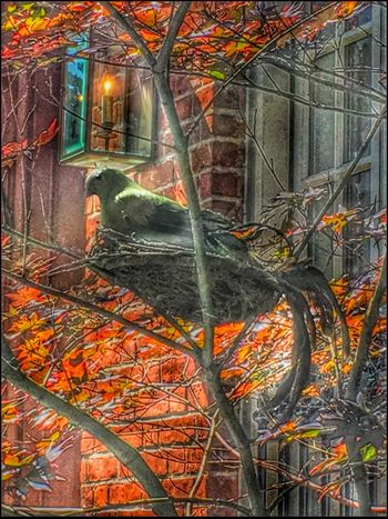 Decoy in Nest - 6/20/16 As I Sees It EyeEm Best Edits EyeEm Best Shots Feel The Journey Fresh On Market June 2016 IPhone Creative Edits W/ Snapseed Opportunistic Street Photography, NYC Original Experiences Thanks For The Decoration Live Love Shop