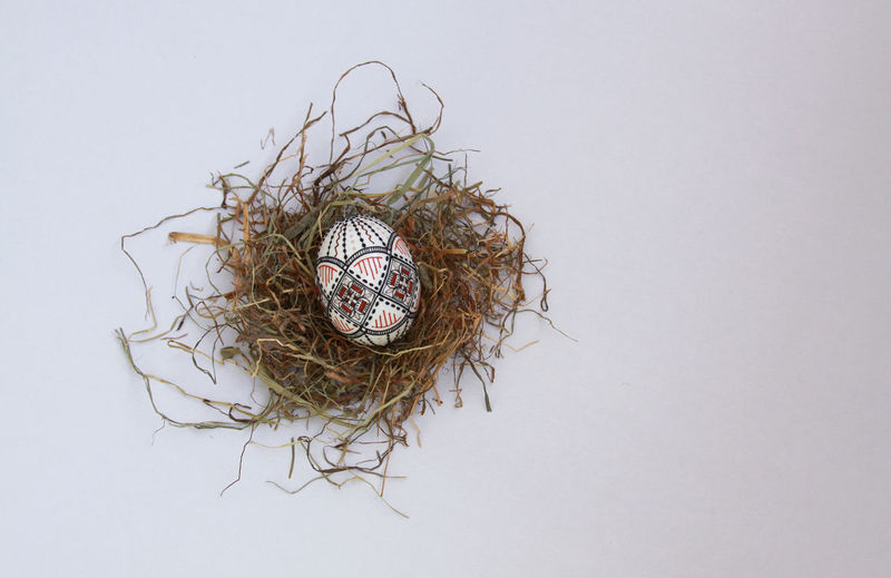 Directly above shot of tree in nest