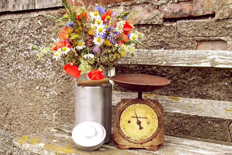 Beauty In Nature Blooming Blossom Botany Close-up Day Flower Flower Head Fragility Freshness Green Color Growing Growth In Bloom Kitchen Scale Milk Churn Nature No People Old Outdoors Petal Pink Color Plant Red Vintage