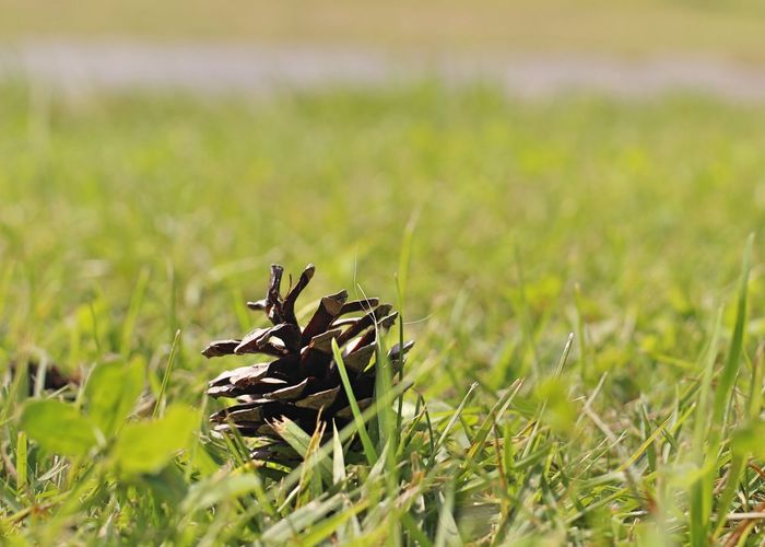 Close-up of plant growing on grassy field