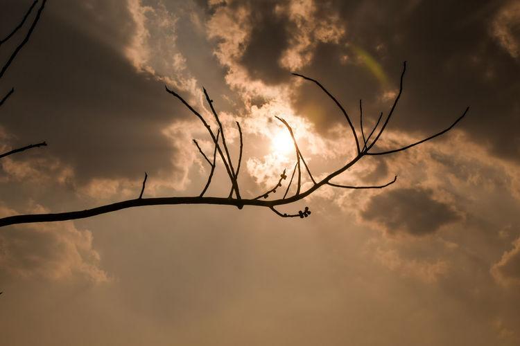 Wallpaper Desktop Wallpaper Sky Clouds Sun Sunlight And Shadow Sunlight Through Clouds Bird Tree Sunset Branch Silhouette Sky Romantic Sky Sky Only Moody Sky Cumulus Cloud Dawn Dramatic Sky My Best Photo