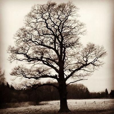 Nature Tree Black & White