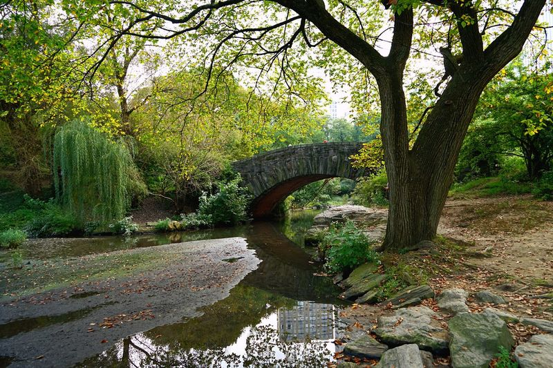Arch bridge over canal amidst trees in forest