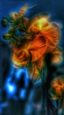 Psychedelic Nature Flower Flower Photography Strong Edit Filterphotography Filter Colorful Colors Blue Red Orange Orange Color Yellow Flower