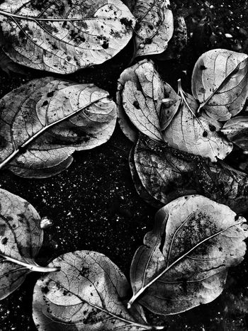 Leaf Nature Autumn Beauty In Nature Bw_collection Outdoors Shootermag Fine Art Photography EyeEm Best Shots Blackandwhite Nature Textured
