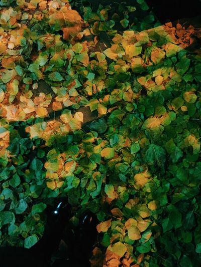 Last leafage Undermyfeet Leafage Autumn🍁🍁🍁 Autumn Leaves Last Night