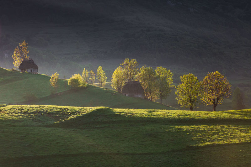 Scenic view of trees on landscape