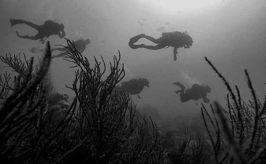 Underwater Photography Beauty In Nature UnderSea Underwater LifeTree Underwater World Outdoors Underwater Diving Undewaterseaworld Underwaterlife Dive Divelandscape, Divestreetoghrophy, Cityscape, Divetrip Indonesia_photography Blackandwhitephotography BW_photography Hitamdanputih Breathing Space Investing In Quality Of Life EyeEmNewHere The Week On EyeEm Your Ticket To Europe