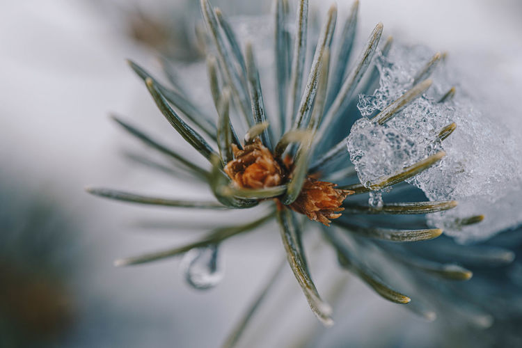 Close-up of flower bud in winter
