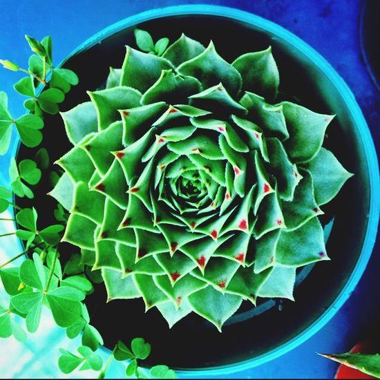Cactus Flower Moms House taking photos