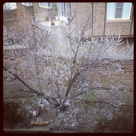 Spring Spring NewYear Instapersia . Iran . insiran