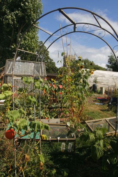 City Farm  Day East London, UK Idyllic Nature Nature No People Outdoors Stepney Tower Hamlets Urban Farm