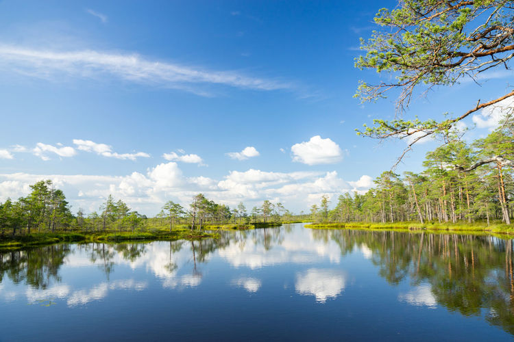 Tolkuse Beauty In Nature Blue Cloud - Sky Day Growth Idyllic Lake Marshland  Nature No People Non-urban Scene Outdoors Reflection Reflection Lake Scenics - Nature Sky Tranquil Scene Tranquility Tree Water Waterfront