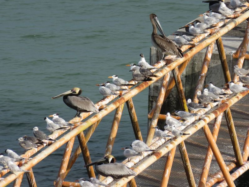 Waiting for take off Water Nature Day Sea Wood - Material No People Transportation Animal Wildlife Bird Outdoors Animal Themes Seagull Sunlight Animal Animals In The Wild