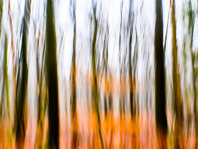 Abstract Forest Forest Photography Sachsenwald Wischer Forest Walk Autumn Trees Tree Trunk Tree Trunks Backgrounds Full Frame No People Close-up Nature Growth Plant Pattern Grass Beauty In Nature Blurred Motion Studio Shot Selective Focus Wind Outdoors Abstract Backgrounds Green Color Textured  Striped Textured Effect