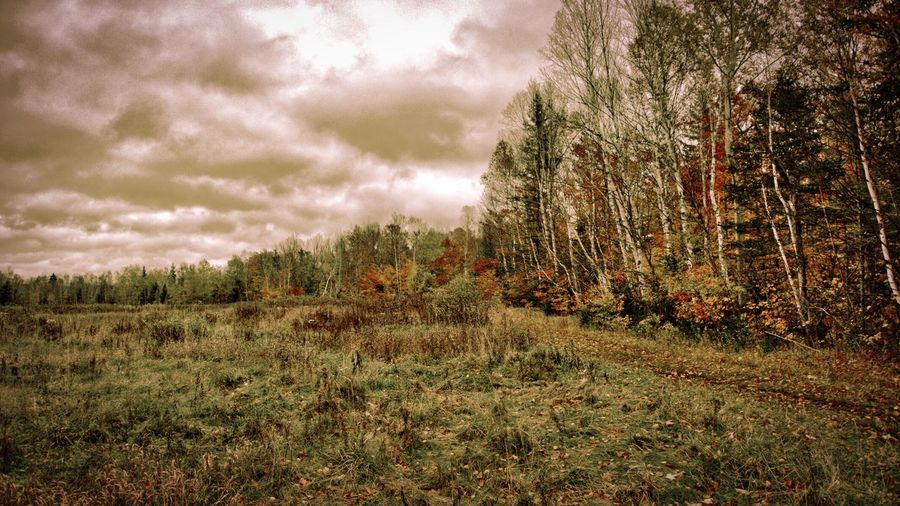 Trees in forest against cloudy sky