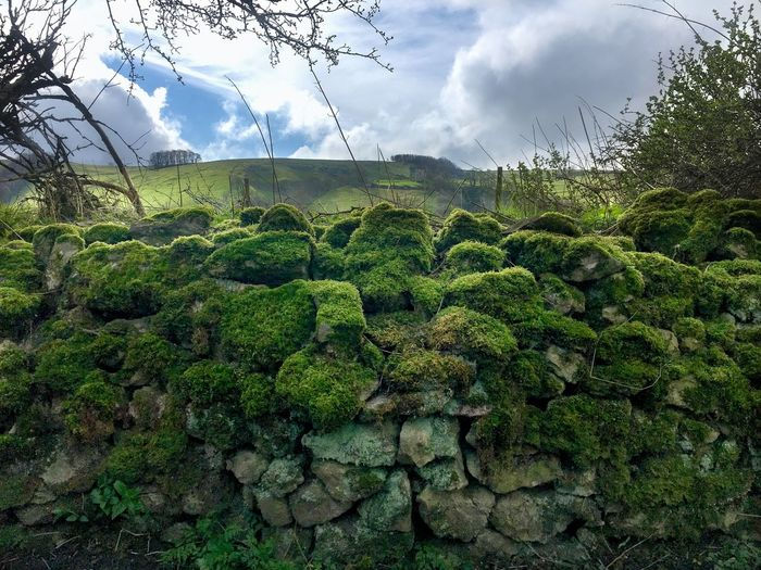 Moss wall with