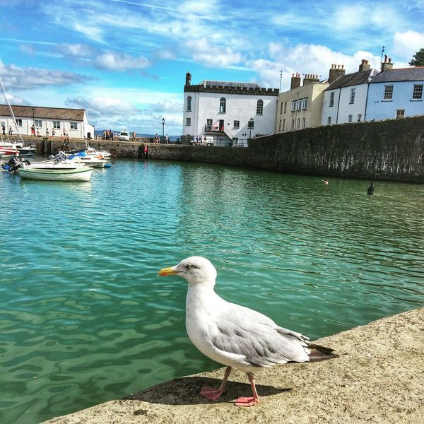 Seagull on the harbour wall Harbour View Seaside Seagull Boats And Water Tenby Pembrokeshire Coast Bird Summertime