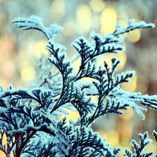 зима Nature Природа Красоты природы
