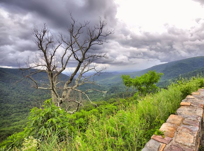 Beauty In Nature Landscape Hill Valley Greenery Greatview Outdoors Susquehanna Valley Virginia USA Light And Shadow Cloudy Intheclouds Summer Traveling Relaxing Serene Outdoors Haze Mountain View Nopeople Landscape #Nature #photography Natural Beauty Overlook Petrified Wood Deadtree