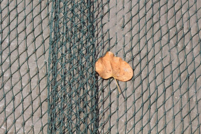 High angle view of dry leaf on footpath
