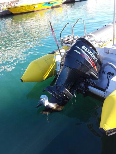 Boats Sea Engine