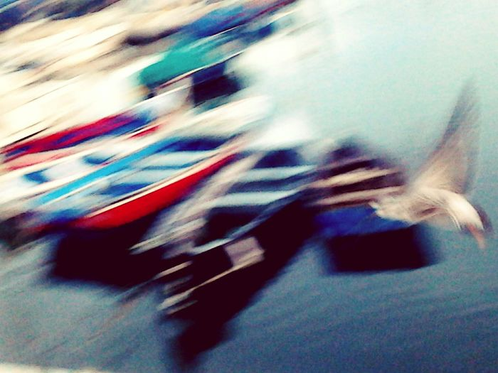 Glitch Good Mistakes SEAGULL IN FLIGHT Boats Fishing Boats Sea Setubal Colorsplash EyeEm Best Shots Abstract Showing Imperfection