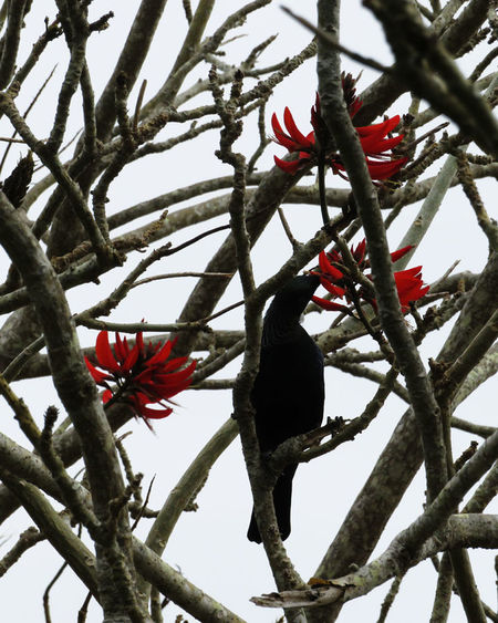 New Zealand Beauty Animals In The Wild Bird Flowers One Animal Outdoors Red Tree