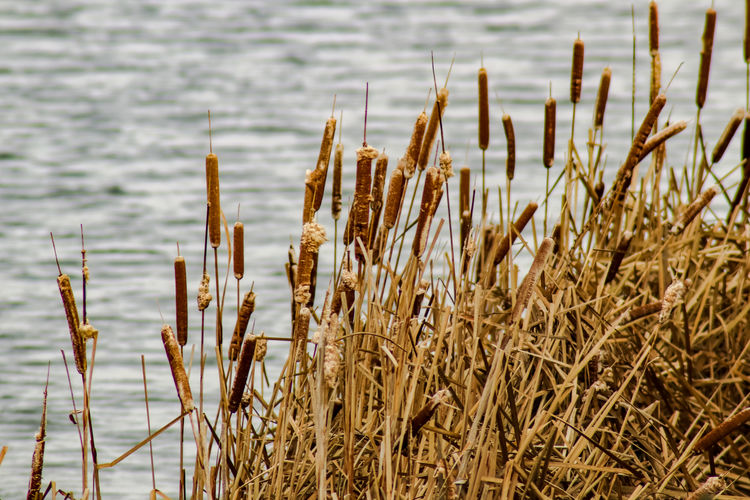 Close-up of dry plants on beach